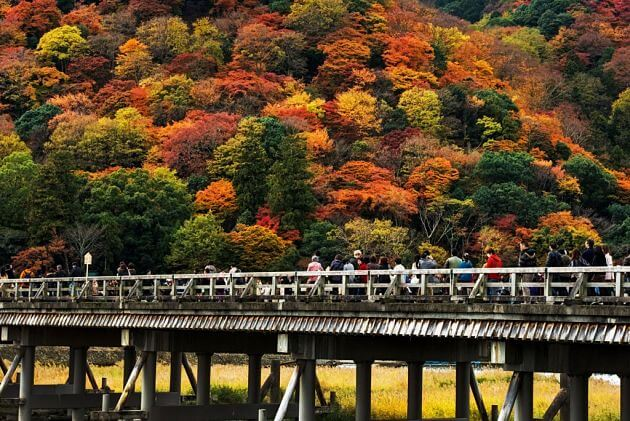 Arashiyama Autumn Foliage