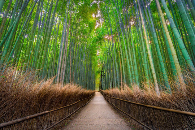 Arashiyama Bamboo Grove Japan unusual beautiful places