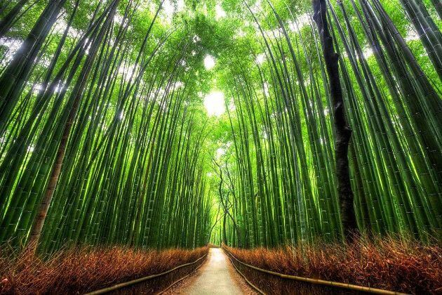 Arashiyama-bamboo-forest-Kyoto-shore-excursions