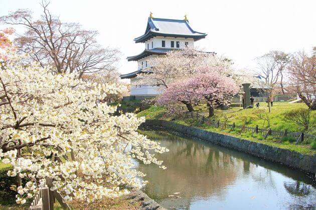Cherry blossom viewing spots Nagasaki