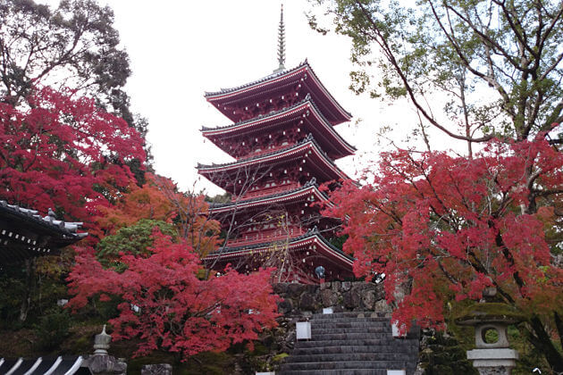 Chikurin Temple attractions Kochi Japan shore excursions