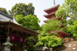 Chikurin-ji Temple-Kochi-shore-excursions