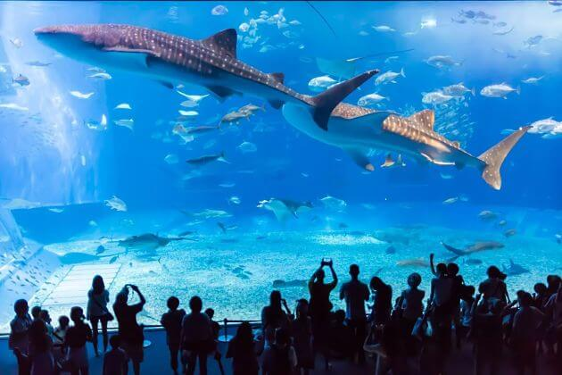 Churaumi Aquarium Naha Okinawa shore excursions attractions