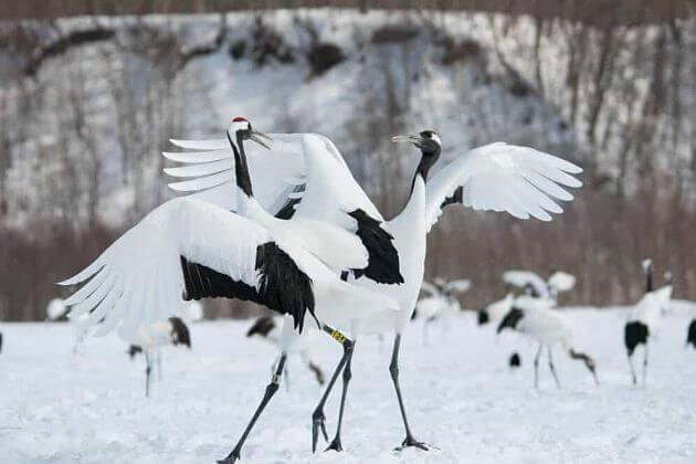 Cranes Nature Park Kushiro shore excursions