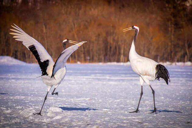 Cranes Nature Park attractions Kushiro shore excursions