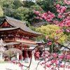 Fukuoka highlights shore excursions