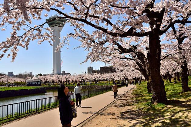 Goryokaku-Park-spring-Hakodate-shore-excursions