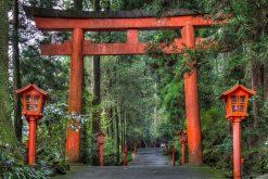 Hakone Shrine Shimizu shore excursions