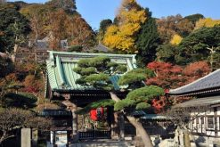 Hasedera Temple Tokyo shore excursions