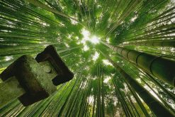 Hokokuji Temple-bamboo-forest
