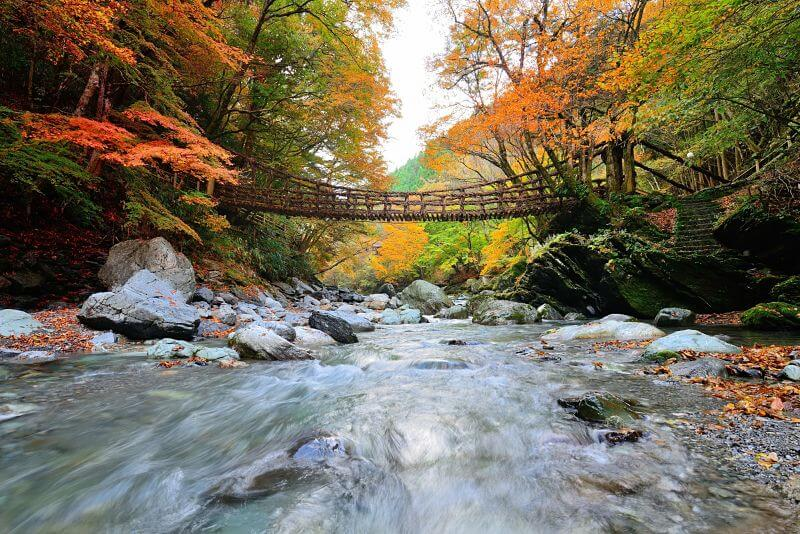 Iya-valley-Kochi-japan-shore-excursions
