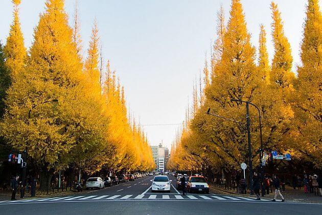 Jingu Gaien Ginkgo Avenue autumn foliage