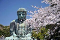 Kotokuin Temple Kamakura tour from Tokyo