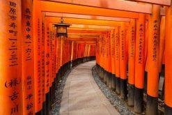 Kyoto highlight shore excursions
