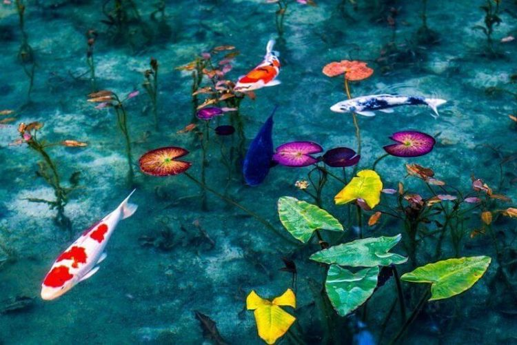 Monet's Garden Marmottan-Kochi-Japan-shore-excursions