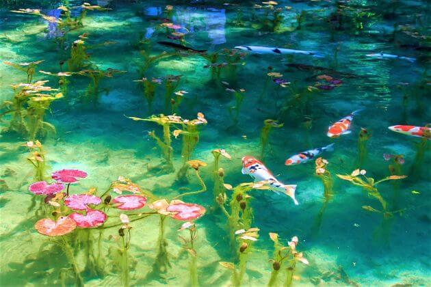 Monet's Garden-Pond-Kochi-japan