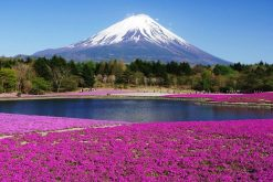 Mount Fuji Hakone Sightseeing Tour