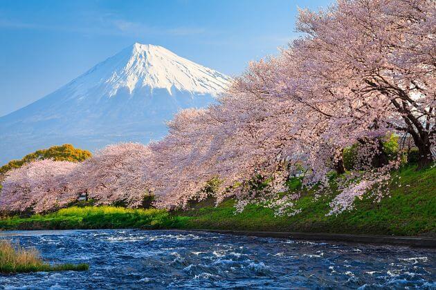 Mount Fuji from Shimizu Tour