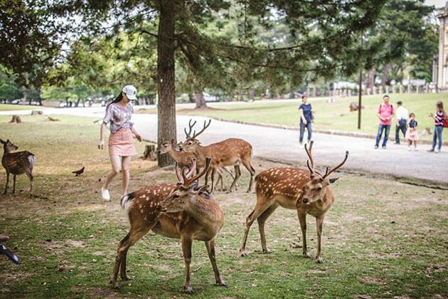 Nara Deer Park in Osaka Shore Excursions
