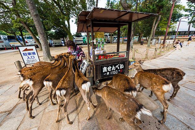 Nara Deer park-osaka-shore-excursions