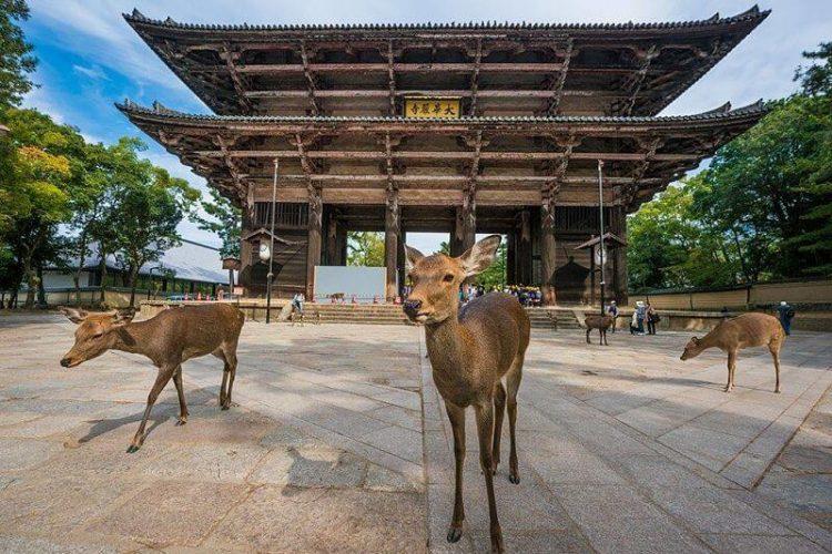 Nara-Osaka-shore-excursions