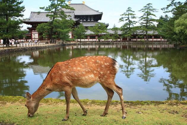 Nara Park attractions Kobe shore excursions