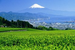 Nihhondaira Ropeway Shimizu shore excursions
