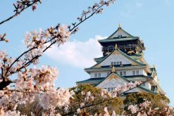 Osaka Sightseeing Half-day Tour
