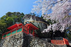 Shore Excursions Shingu Shrines & Dorokyo Gorge
