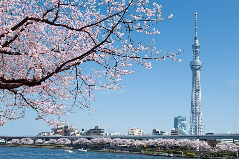 Taste of Tokyo shore excursions