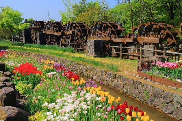 Tonami Tulip Park Toyama shore excursions