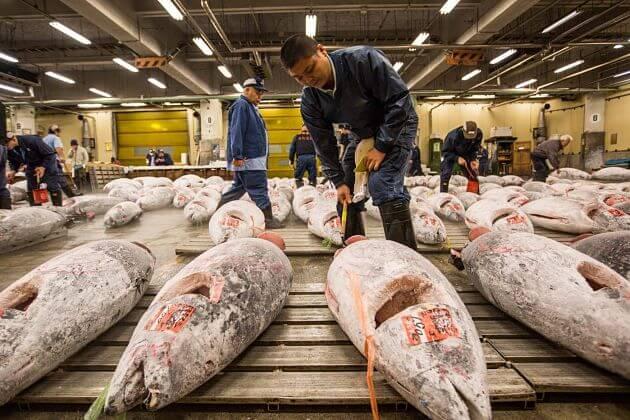 Toyosu Fishery Market-Tokyo-shore-excursions