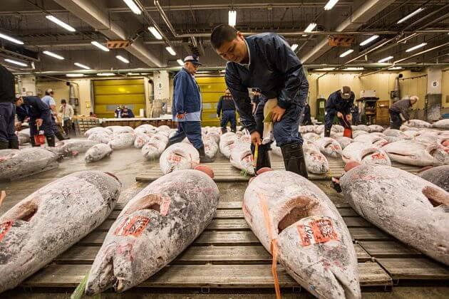 Tsukiji Fish Market Tokyo shore excursions