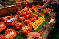 Washo Fish Market Kushiro shore excursions