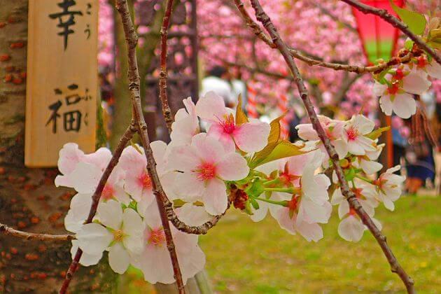 Yoshika Park-Hiroshima-shore-excursions