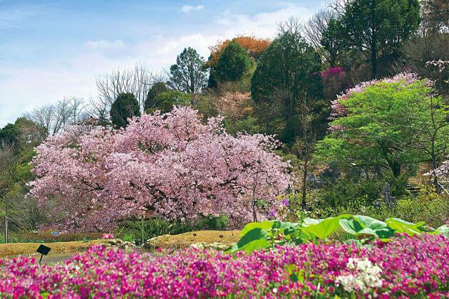 makino-botanical-garden-Kochi-Japan-shore-excursions